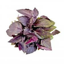 Basil Opal 12 ct Bunches Fresh 1 lb