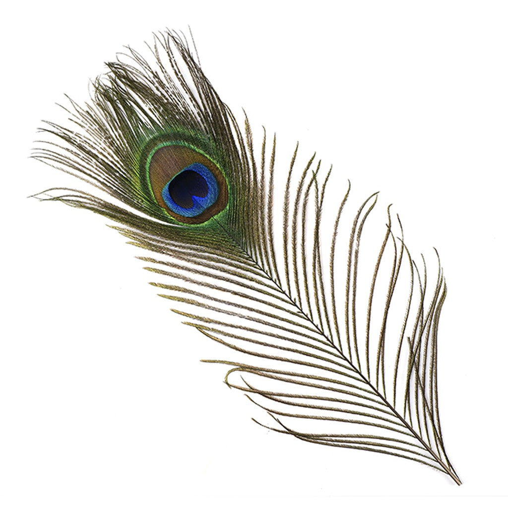 Peacock Eyes Natural