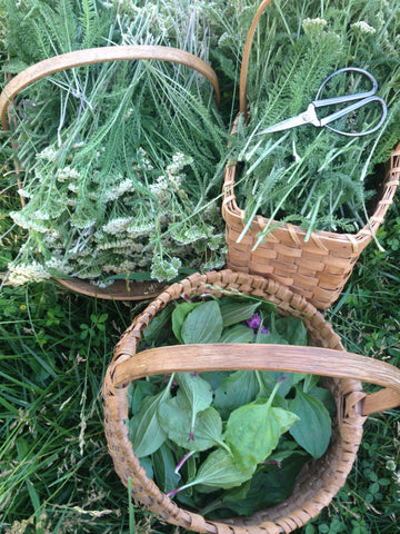 Grow Your Own Herbal Remedies Class