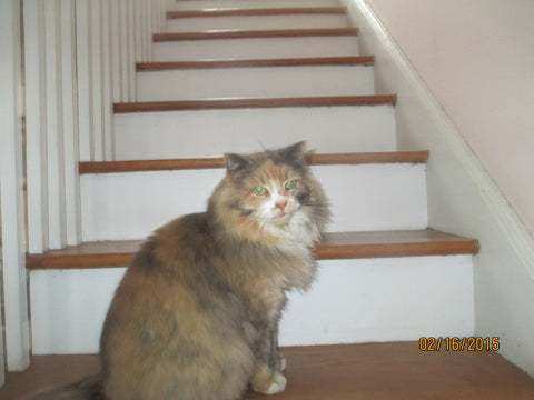 A picture of a cat on stairs with green eyes and brown/black fur