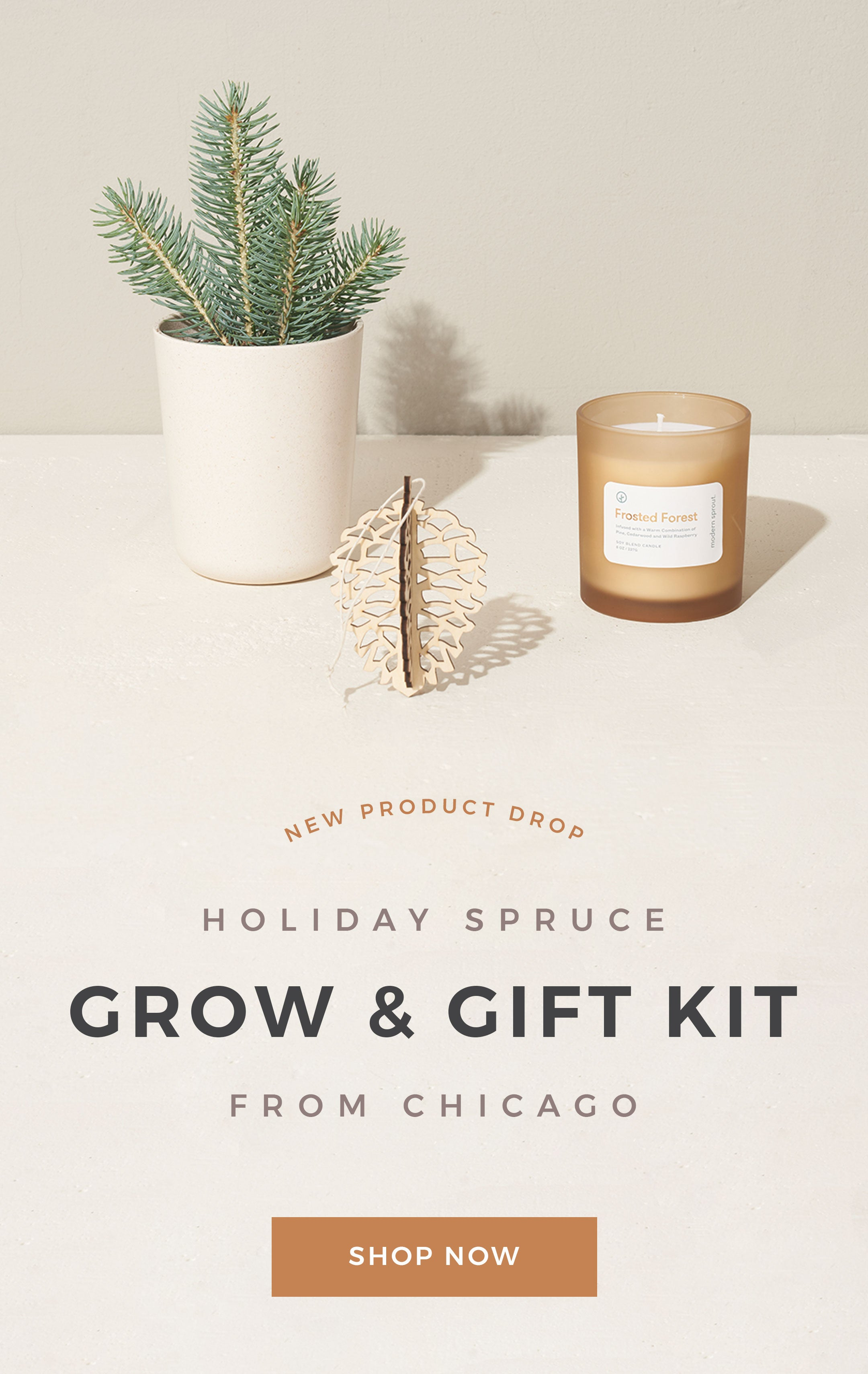 Spruce Grow & Gift Set by Letterfolk