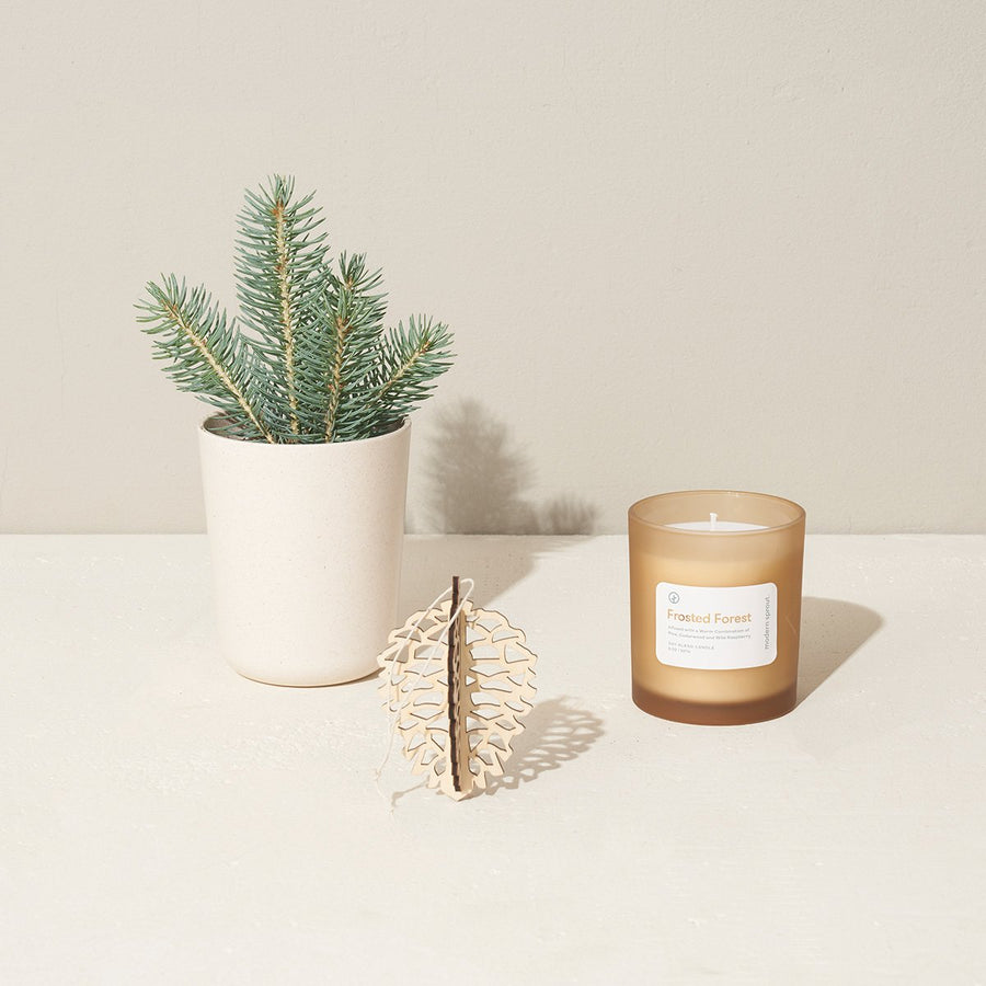 Spruce Grow & Gift Set - Letterfolk