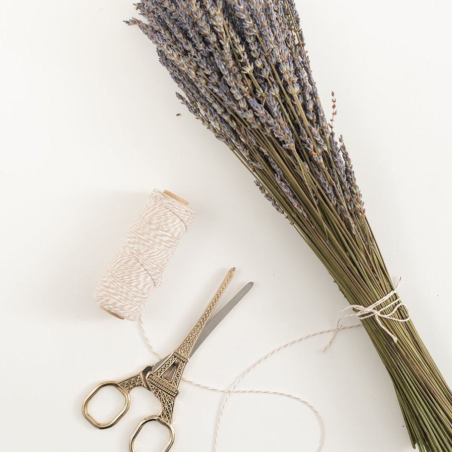 Lavender Bundle - Letterfolk