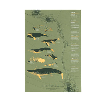 Pacific Whales Print - Letterfolk