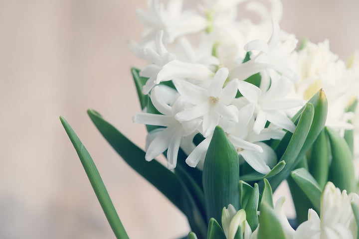 Here's Why Tuberose Is Our Bestselling Fragrance Of The Month