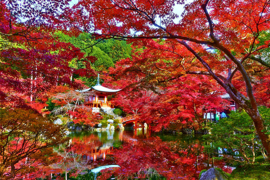 The World's MOST Stunningly Weird And Beautiful Trees. #15 ... |Beautiful Japanese Trees