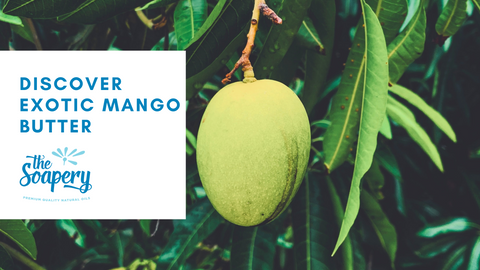 Discover Exotic Mango Butter