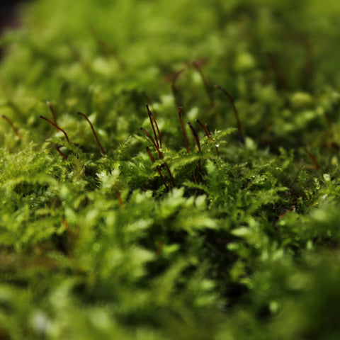 We are stardust explores...with moss specialist Dr Jessica Royles