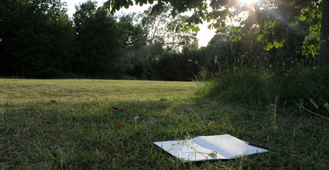 Nature journal in summer