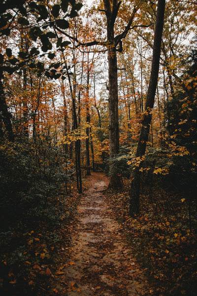 Path into the woods credit: Will Stevens, Unsplash