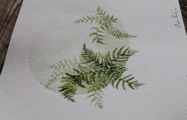 Mini Woodland Ferns Original Watercolour Painting