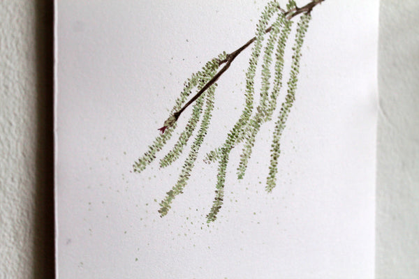 Catkin Original Watercolour Artwork