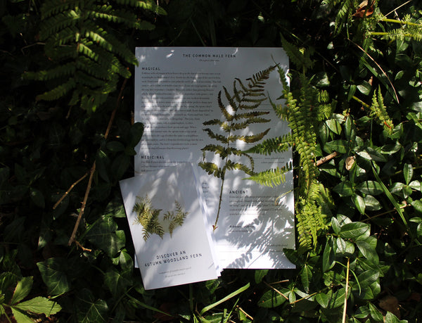 Woodland fern nature guide