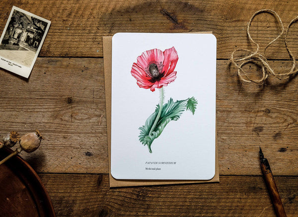 Poppy medicinal plant greetings card