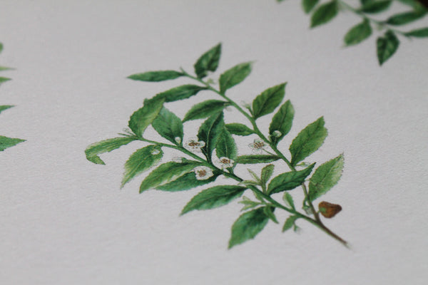 Tea plant pattern greetings card