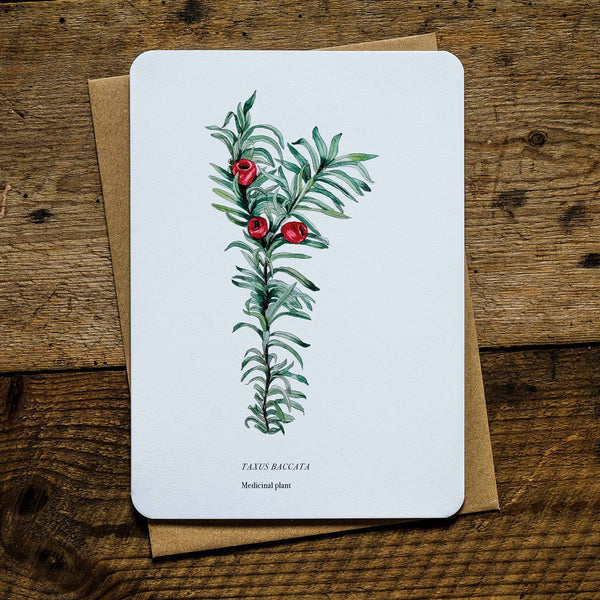 Yew tree medicinal plant greetings card