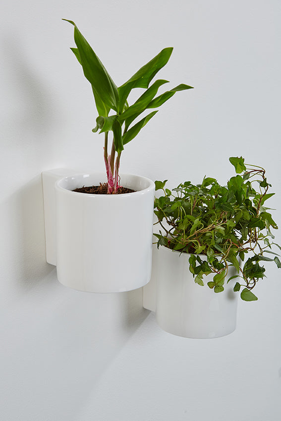 Ceramic, flower pots, wall, white, round, potted plants