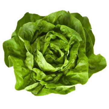 Head Lettuce (varieties)