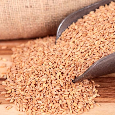 Red Wheat Berries ( 1 lb)