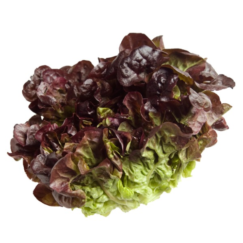 Red Butter Lettuce (per head)