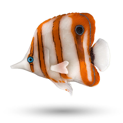 "SD-CBFISH 3.75"" Copperband Butterfly Fish Décor, 1pc"