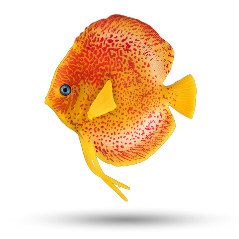 "SD-DSCFISH 3.75"" Discus Fish Decor, 1 pc"