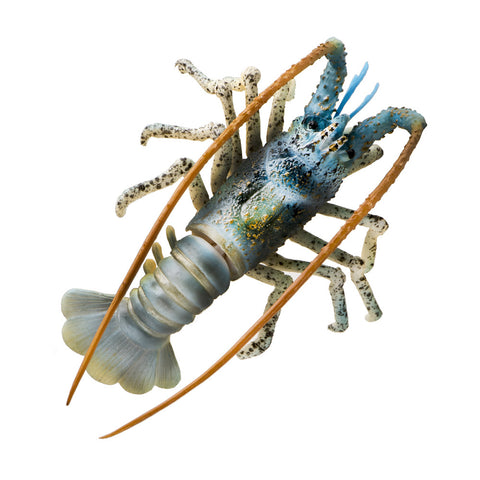 "SD-LBSTRGR 4"" Spiny Lobster Décor - Aqua, 1pc"