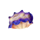 Tridacna Clam Decor, 1pc