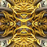 Kelp Mask, Digital Photograph by Kristin Doner
