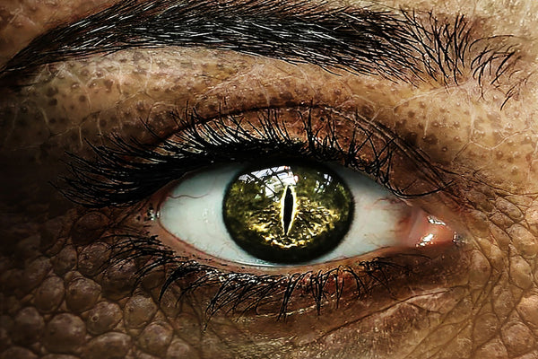 12 Million People of the American Population Think That Reptilians Rule the World