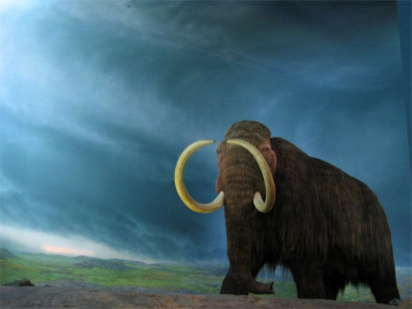 Science Is Bringing The Extinct Ancient Mammoth Back To Life