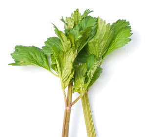 Celery Peppermint Stick Herb