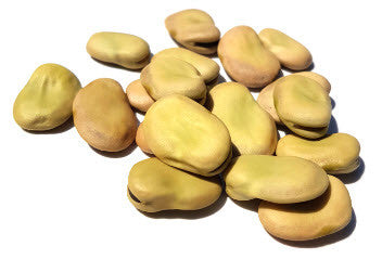 Fava Windsor Bean