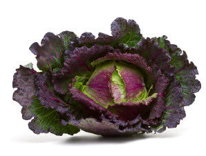Purple Savoy Cabbage Glen Seeds
