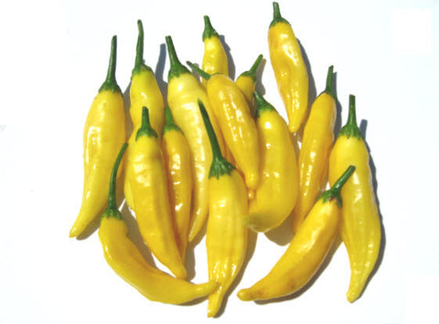 Aji Amarillo Chilli