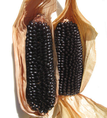 Dakota Black Popcorn