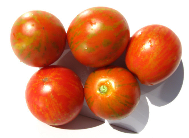 Darby Red and Yellow Tomato