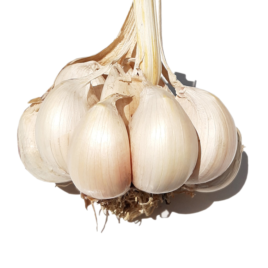 Tuscan Garlic
