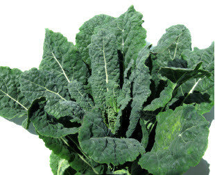 Black Palm Kale