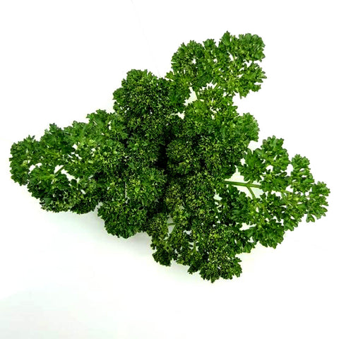 Parsley Herb: Moss Curled