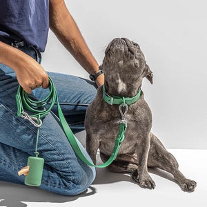 Wild One Dog Leash - Spruce