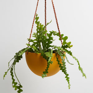 Capra Designs | Capra Designs Block Color Dome Hanging Planter - Golden | Garden - Planters | Phoenix General Store