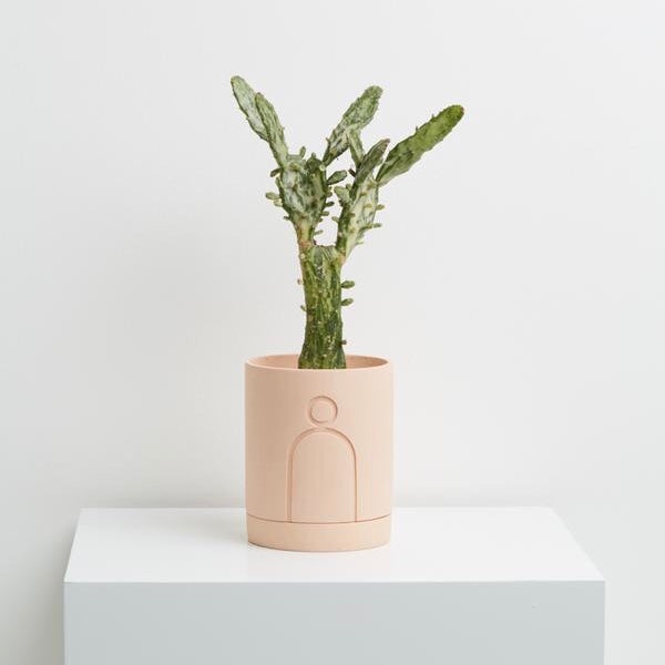 Capra Designs Etch Planter - Salt