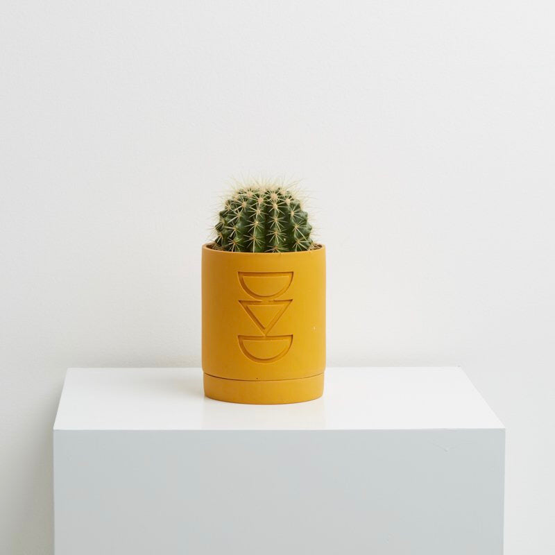 Capra Designs Etch Planter - Golden