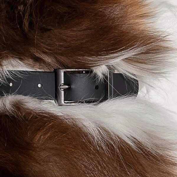 Wild One Dog Collar - Black
