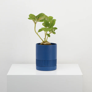 Capra Designs Etch Planter - Neptune
