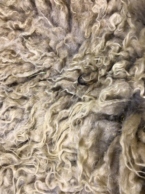 Taste Of The Wind Chip's Badgerface Raw Icelandic Fleece