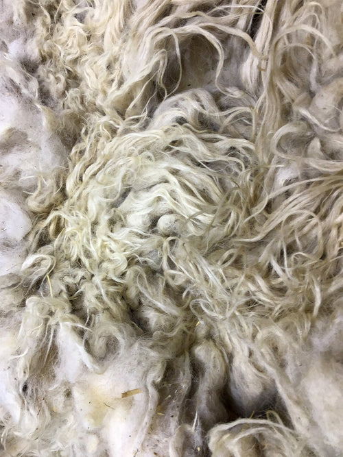 Taste Of The Wind Lotus 's Champagne Raw Icelandic Fleece