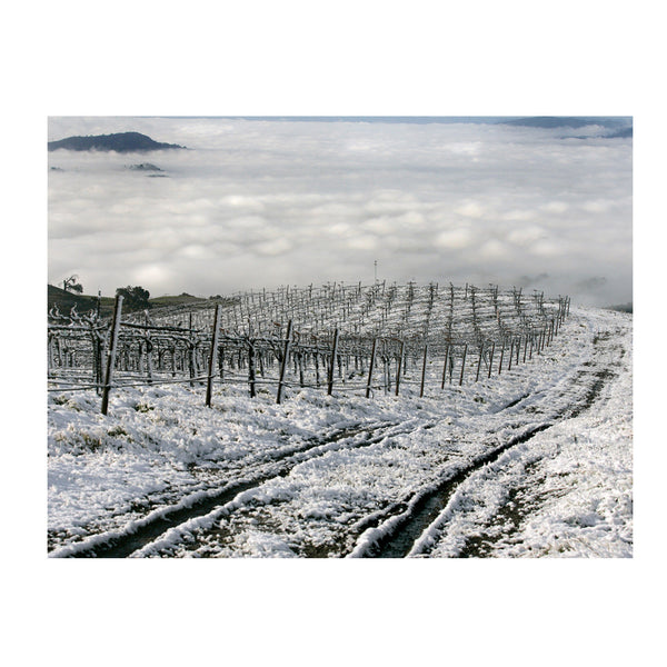 Frozen Vines in Wine Country