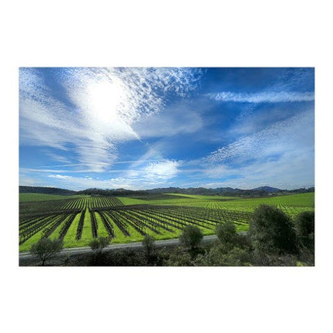 Picturesque View of Gallo Vineyards